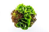 Mixed vegetable salad. — Stock Photo