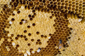 Closeup honeycomb. — Stockfoto