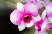 Beautiful purple orchid flower. — Stock Photo