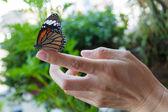 Prachtige vlinder zittend op de vinger meisje. — Stockfoto