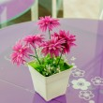 Decorative flower. — Stock Photo