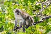 Monkey. — Stock Photo