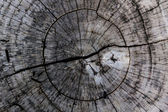 Wooden background and texture,rings of cut tree trunk. — Stock Photo