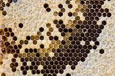 Yellow beautiful honeycomb. — Stock Photo