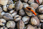 Fresh Shellfish Blood Cockles. — Stock Photo