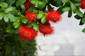 Red Flower Bush willow. — Stock Photo