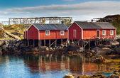 Rorbu rouge typique huttes au toit de gazon dans la ville de la reine sur les îles lofoten en norvège — Photo
