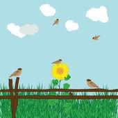 Sunflover — Stock Vector