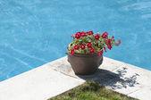Pot in pool — Stock Photo