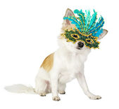 Chihuahua dog with bright carnival mask — Stock Photo