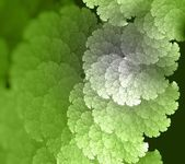 Green abstract fractal background — Stock Photo