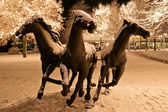 Thre horses from light garlands — ストック写真