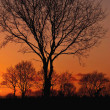 Nice sunset with trees — Stock Photo