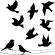 Set of birds silhouettes — Stock Vector