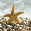 Sea star on the beach — Stock fotografie