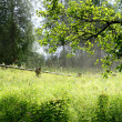 Countryside forest scene — Stock Photo