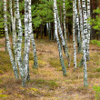 Forest scene — Stock Photo #32819283
