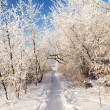 Road in the snow covered walley against blue sky — Stock Photo