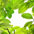 Stock Photo: Green leaves frame