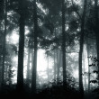 A mystical forest with fog and shining behind trees — Stock Photo #32819675