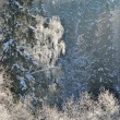 Frost on trees — Stockfoto