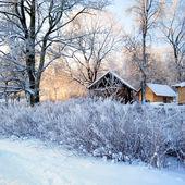 мороз на дерево на восход — Стоковое фото