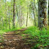 Camino en el bosque de mañana — Foto de Stock