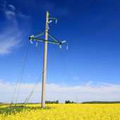 Yellow rapeseed field and electricity line in Latvia — Stock Photo