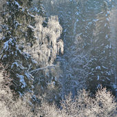 Frost on trees — Stock Photo