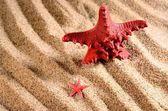 Two sea stars on the sandy beach — Stock Photo