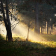 Sunbeams in fog in the forest — Photo