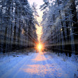 Stock Photo: Sun rays in winter forest