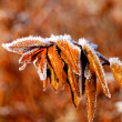Autumn leafs with hoar frost — Stock Photo #32820939