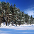 Winter forest in bright sunny day — Stok fotoğraf #32820947