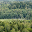 Hills with forest — Stock Photo