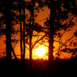 Tree silhouettes against orange sunset — Stockfoto