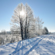 Winter countryside view — Foto Stock
