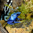 Frog in terrarium — Stockfoto