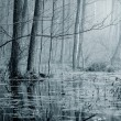 Swamp in fog at the sunrise — Stock Photo #32822955