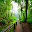 Staiway in forest disappearing in fog — Stockfoto