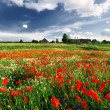 A poppy field and a country house in Latvia — Stock Photo #32823649