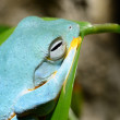 Stock Photo: Colorful blue frog in terrarium