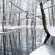 Foresr Fluss im winter — Stockfoto