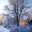 Frost on tree at the sunrise — Stock Photo