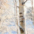 Winter forest view — Stock fotografie