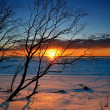 Tree silhouette against colorful sunset at snowy Baltic seshore — Stock Photo #32826167