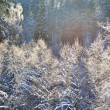 Frost on trees in river valley in winter — Stock Photo