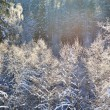 Stock Photo: Frost on trees in river valley in winter