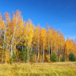 Classical Autumn landscape — Stock fotografie