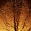 Close-up of a tree in the fog with sunbeams — Stock Photo #32826529